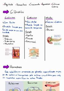Introdução Sistema Endócrino