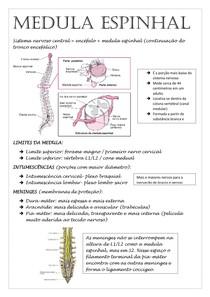 Resumo Medula Espinhal