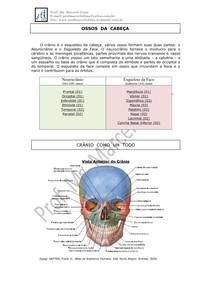 Apostila De Anatomia Da Cabeça Pdf Anatomia De Cabeça E