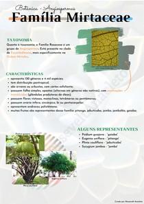 Família Mirtaceae   Botânica - Angiospermas