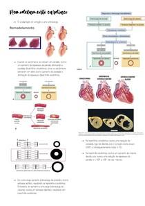 Remodelamento cardíac1