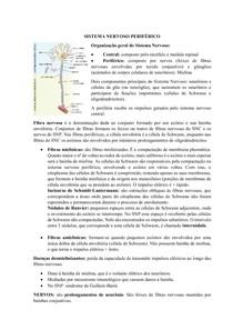AULA 7 - SISTEMA NERVOSO PERIFÉRICO