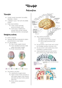 Telencéfalo - Neuroanatomia