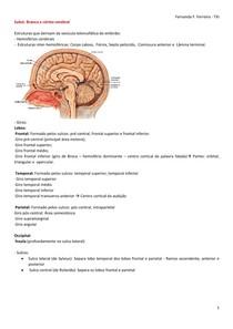 Anatomia do Córtex