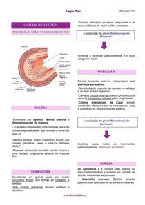 Resumo - Camadas do trato gastrointestinal