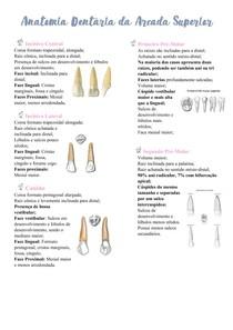 Anatomia Dentária da Arcada Superior