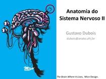 Anatomia do Sistema Nervoso II