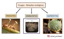 Relações ecológicas de fungos