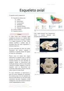 Esqueleto-axial