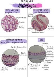 Identificando células