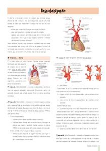 Resumo - Vascularização