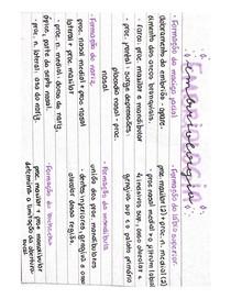 Mini Resumo de Embriologia