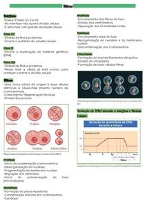 Divisão Celular: Mitose