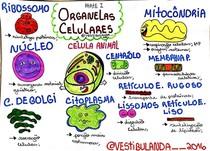 Organelas celulares - Biologia Geral