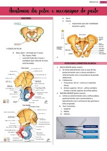 Anatomia da pelve e mecanismo do parto