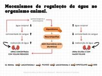 Mecanismos de regulação da água no organismo animal