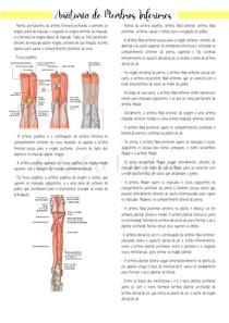 Anatomia de Membros Inferiores