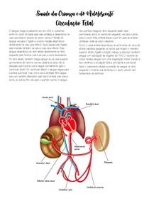 Saúde da Criança e do Adolescente - circulação fetal