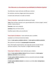 8 Vias Aferentes da Medula Espinhal
