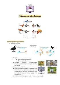 Sistemas sociais das aves