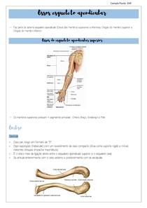 Ossos esqueleto apendicular