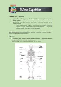 ANATOMIA HUMANA - SISTEMA ESQUELÉTICO / OSTEOLOGIA