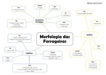 Mapa mental morfologia das forrageiras