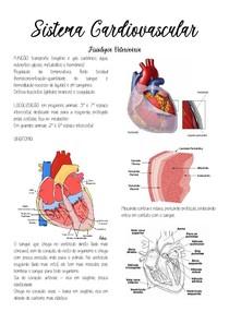 Sistema cardiovascular e respiratório