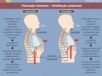 fisiologia humana - sistema respiratório 2 - ventilação pulmonar