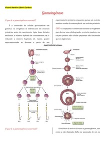 Gametogênese: espermatogênese e ovulogênese