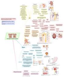 Fisiologia do Sistema Urinário