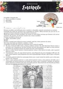 Encefalo (tronco encefálico, cerebelo, telencéfalo e diencéfalo) neuroanatomia funcional