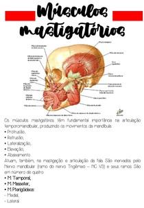 Musculos mastigadores