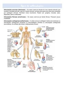 Tipos de articulações - Resumo de revisão
