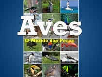 Aves - O Mundo dos Pássaros - APRESENTAÇÃO DE SLIDES - SEMINÁRIO BIOLOGIA 2° ANO DO ENSINO MÉDIO (2013)