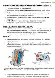 Embriologia - Sistema Genital