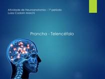 Prancha 04 - Telencefalo - Neuroanatomia