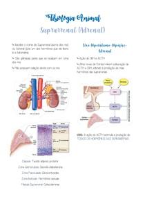 Resumo Suprarrenal - Fisiologia Animal