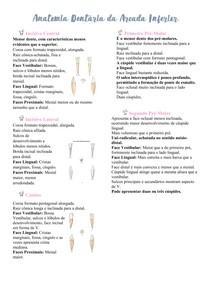 Anatomia Dentária da Arcada Inferior