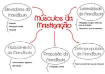 Mapa Mental Músculos da Mastigação