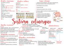 Sistema Colinergico