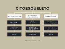 Citoesqueleto - Mapa mental