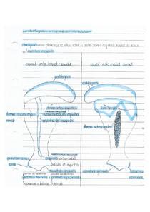 Osteologia: ossos do membro torácico | CA I MACRO