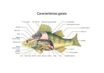 07_peixes_osseos_parte2
