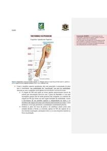 Osteologia dos Membros Superiores