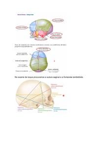 feto de termo e relaçao utero fetal