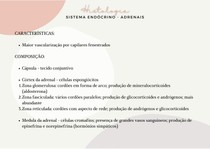 Histologia - Sistema endócrino (adrenais)