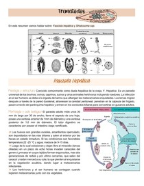Trematodos - F hepatica e Shistosoma