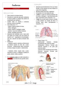 Anatomia - coração