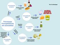 Mapa mental - Processos fermentativos em alimentos